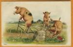 porco de bibiclete