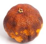 laranja-podre