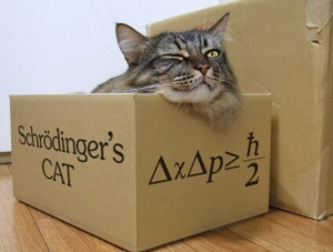 schrc3b6dingers-cat.jpg